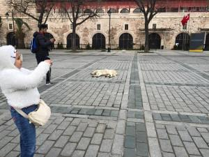 Street dog chillin Istanbul